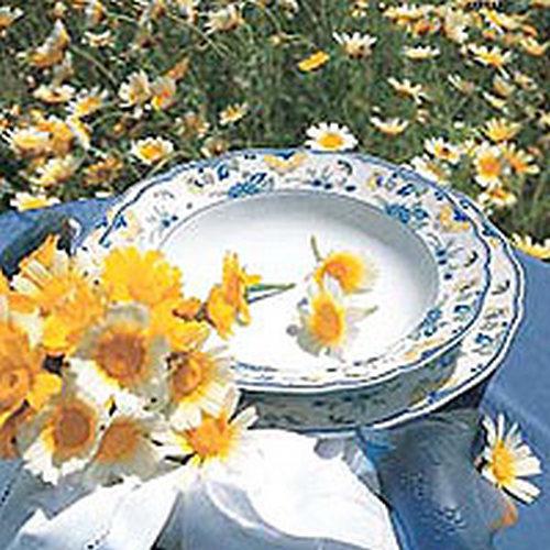 Teller aus Porzellan Keramik und Glas