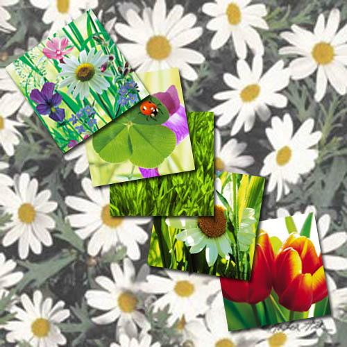 Paper Napkins Spring